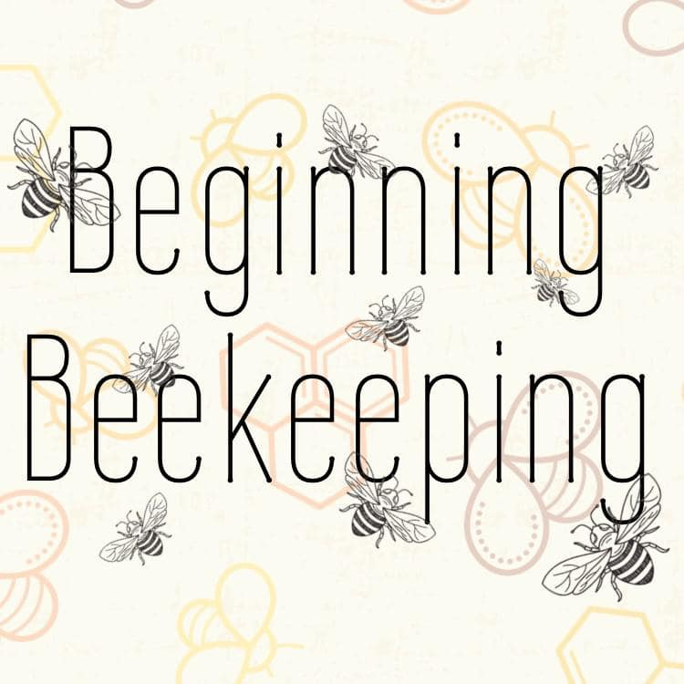 Image for Post - What To Know About Beginning Beekeeping