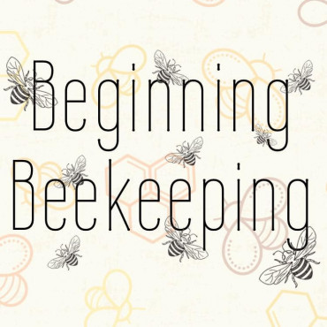 Image for What To Know About Beginning Beekeeping