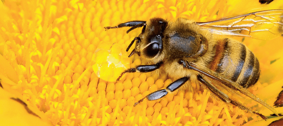 Free Shipping Honey Bees and Beekeeping Supplies for sale in the United States around AL AK AZ AR CA CO CT DE FL GA HI ID IL IN IA KS KY LA ME MD MA MI MN MS MO MT NE NV NH NJ NM NY NC ND OH OK OR PA RI SC SD TN TX UT VT VA WA WV WI WY
