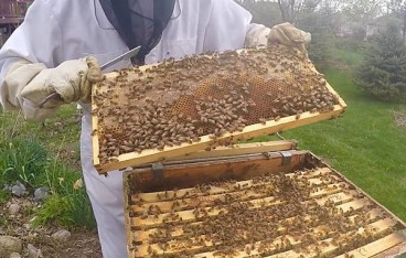 Image for What Supplies Do I Need To Start Beekeeping With?