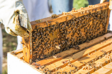 Image for Free Shipping Beekeeping Supplies For Sale In The United States
