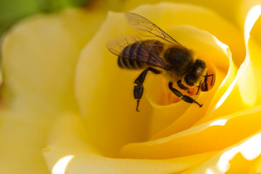 Image for Free Shipping Honey Bee Supplies For Sale In The United States