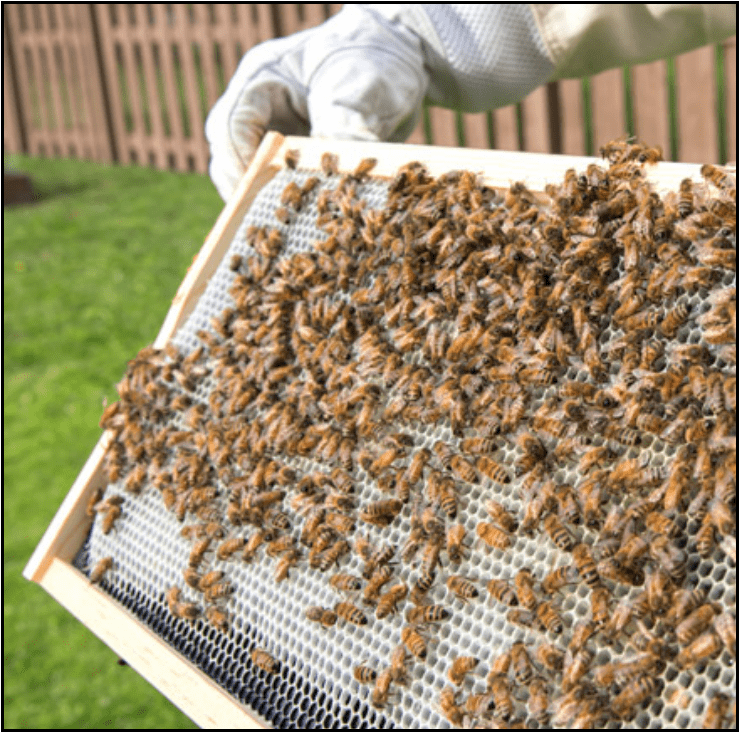 Image for Post - Free Shipping Beekeeping Supplies For Sale In The United States
