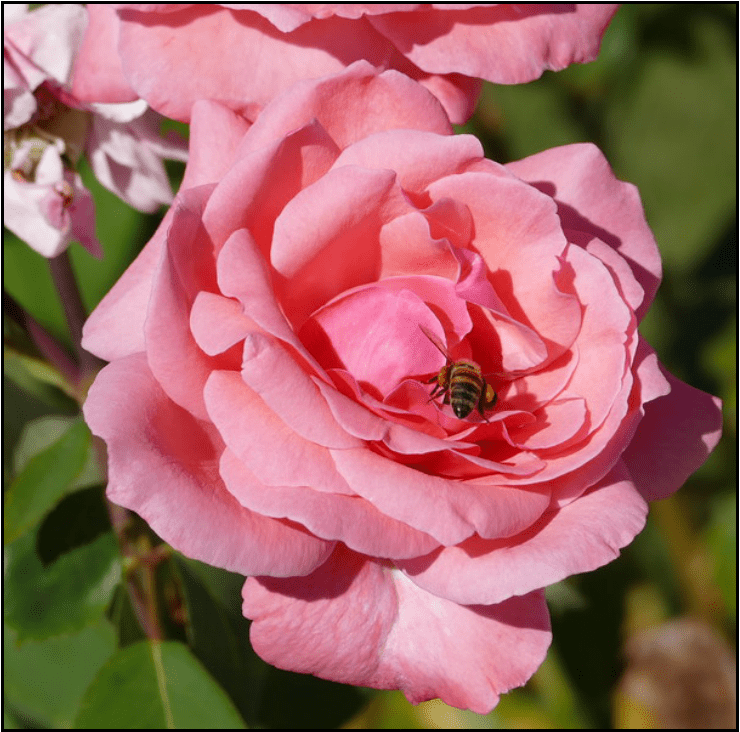 Image for Post - Free Shipping Honey Bee Supplies For Sale In The United States