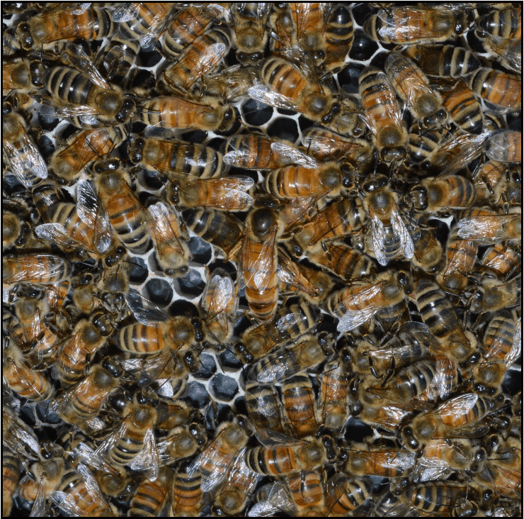 Image for Post - Best Honey Bee Feeders Depending on the Time of Year