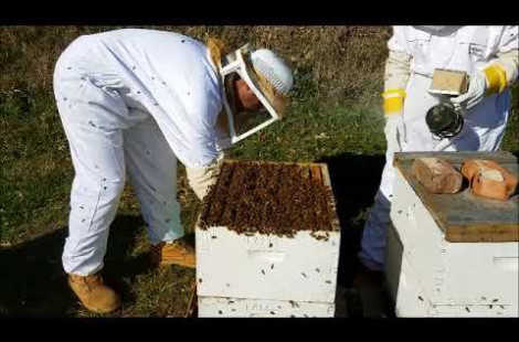 Preview Image for video - How to get your honey bee hives ready for winter 2020 - 2021