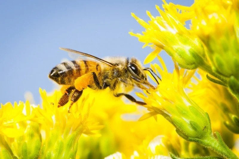 United States Beekeeping Honey Bee Supplies for sale Free Shipping Supplies Supplier Producer Company in the USA